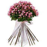 부바르디아 bouquet
