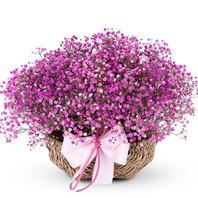 핑크 안개꽃