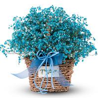 블루안개꽃